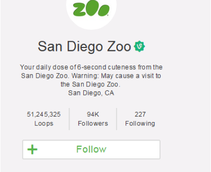 Vine Videos im Zoo-Marketing