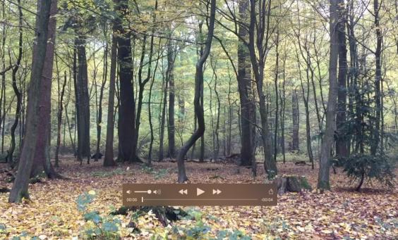 Cinemagraph - das neue Format im Snack-Content